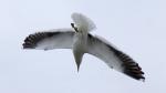 gull_03